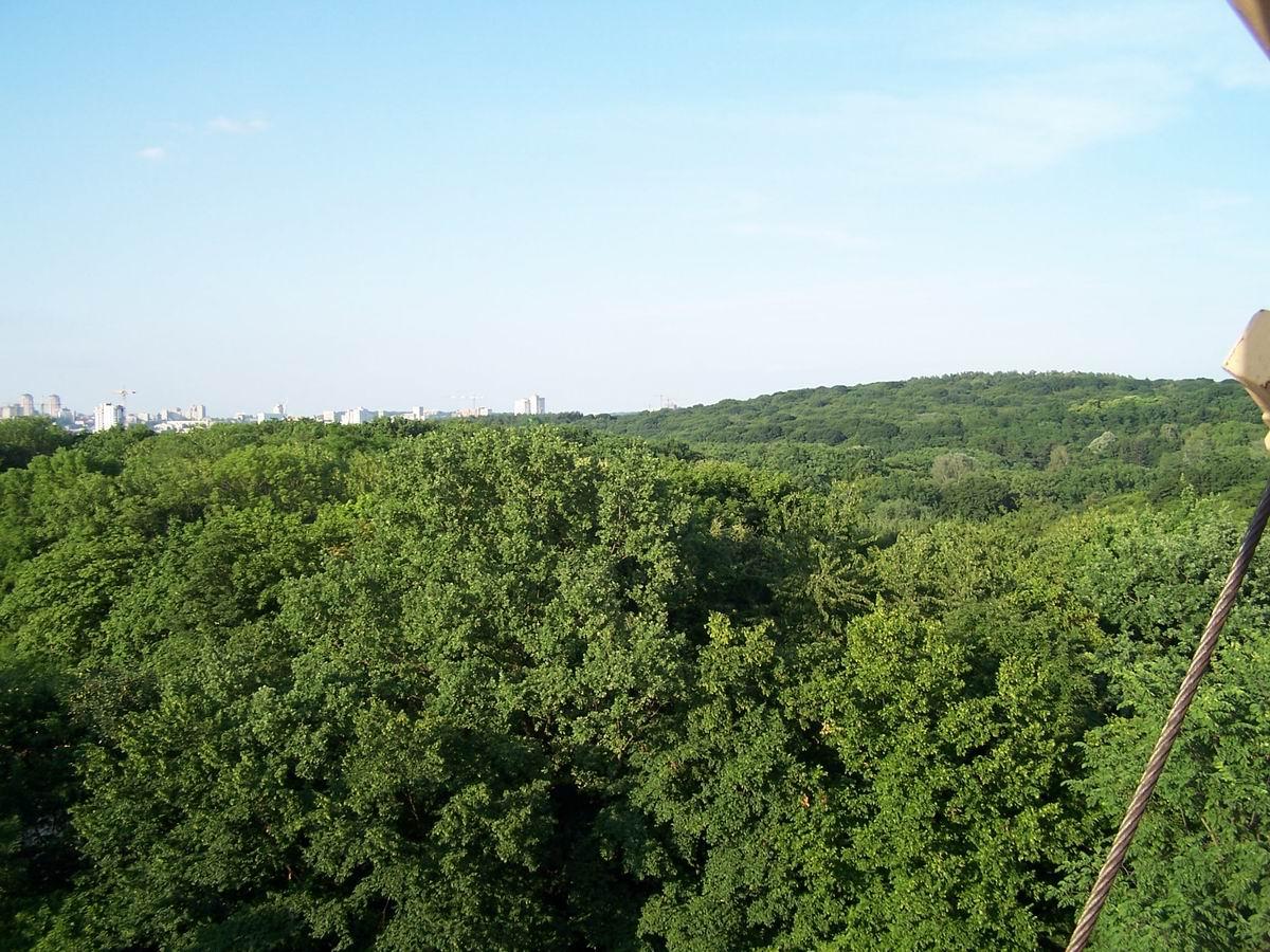 Голосіївський парк з оглядового колеса
