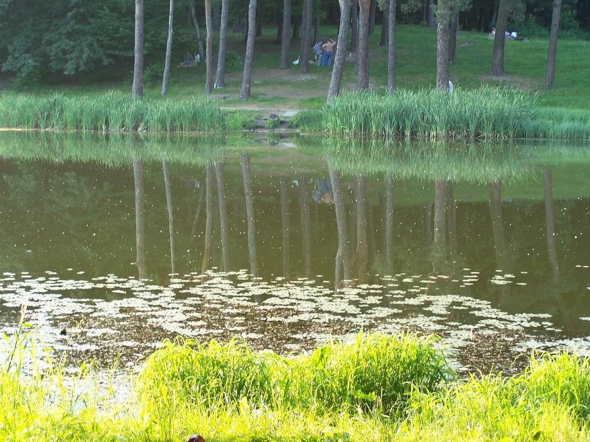 Ставок в Голосіївському парку