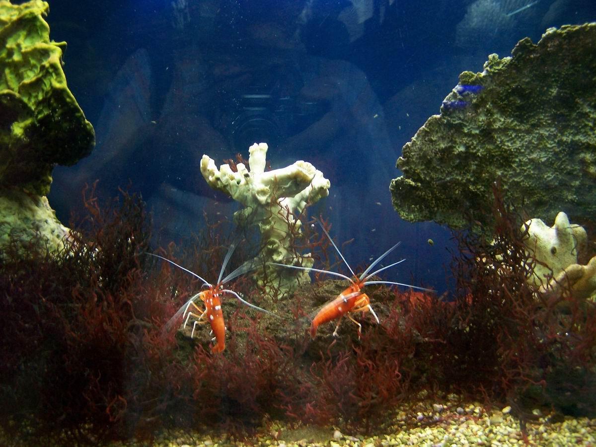 В приміщенні Севастопольського акваріуму