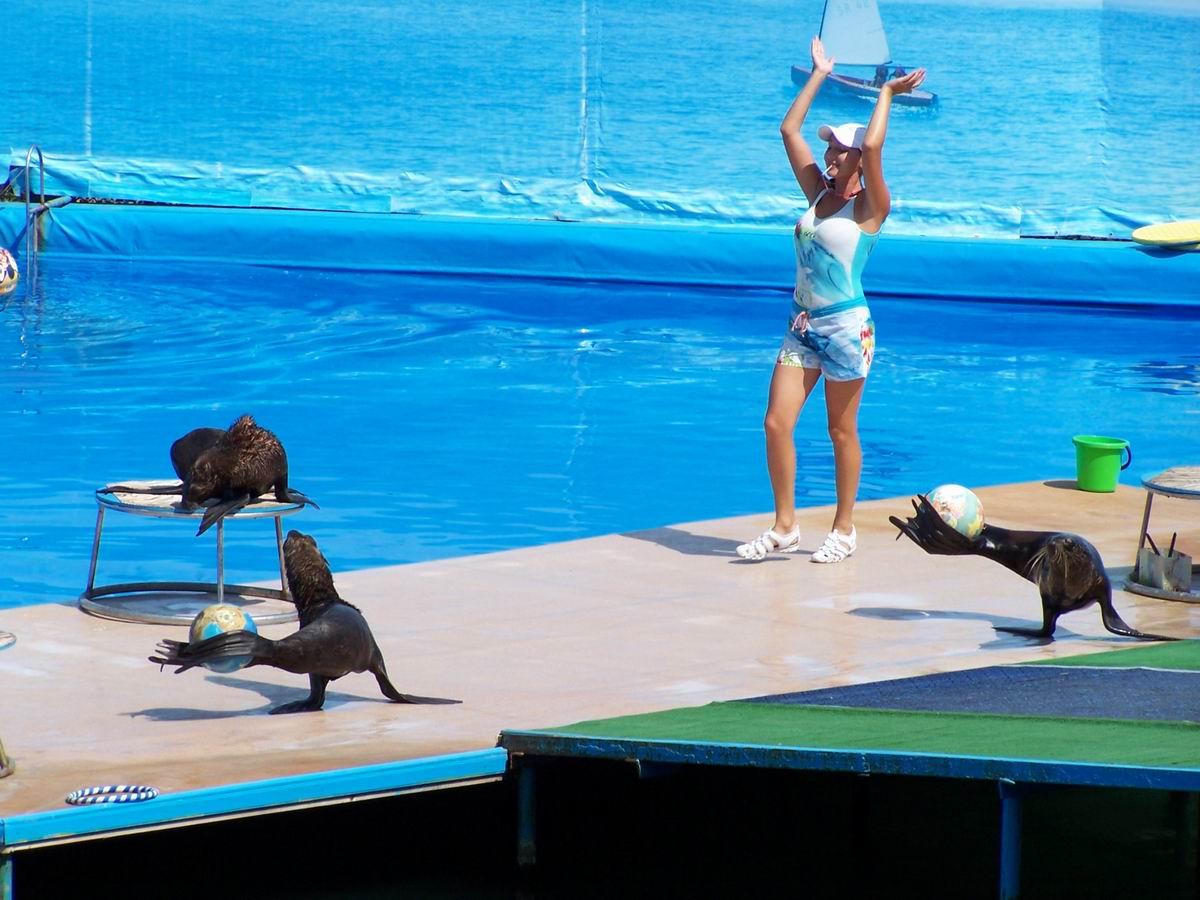 Дельфінаріум. Виступ морських котиків