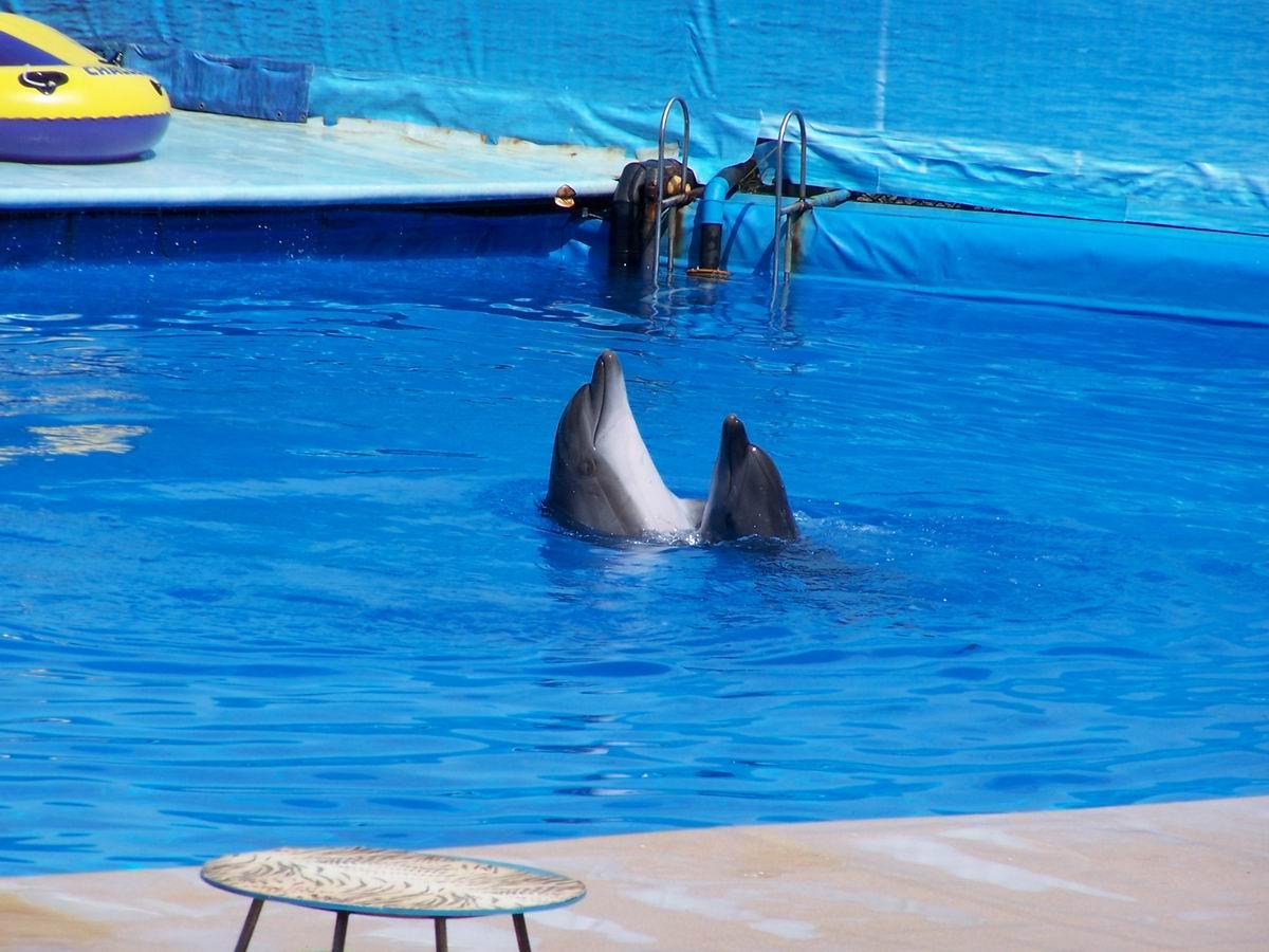 Дельфінаріум. Виступ дельфінів