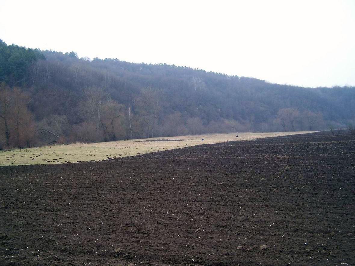 Околиці с. Ріпенці біля смт Смотрич