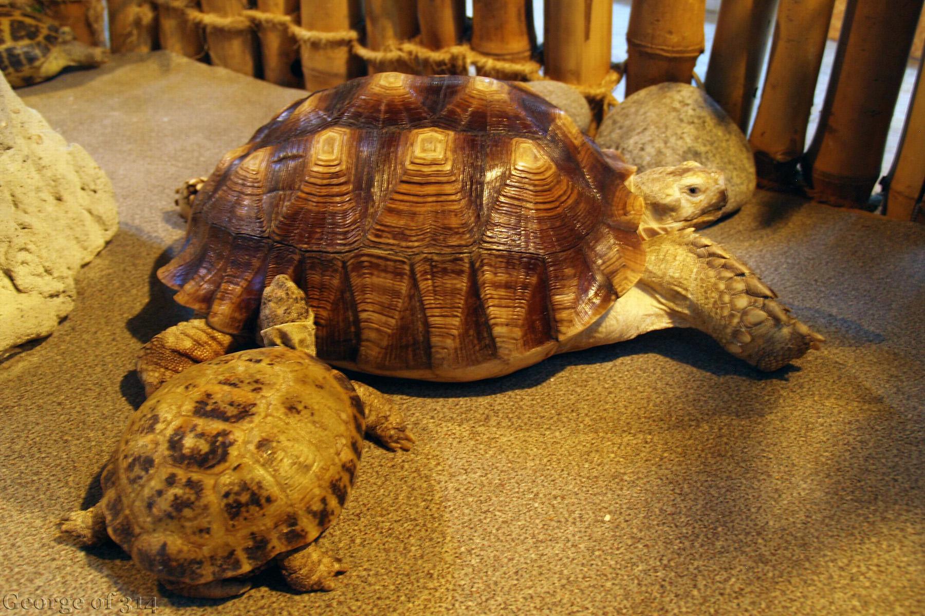 Черепахи в одеському океанаріумі