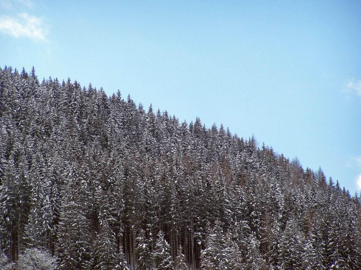 Альпи біля м. Цель-ам-Зее, Австрія
